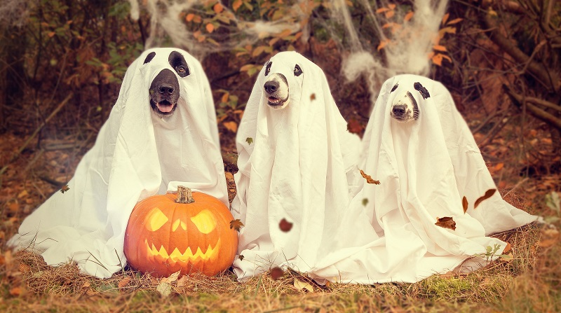 2018 Halloween Events for Families in Tulsa