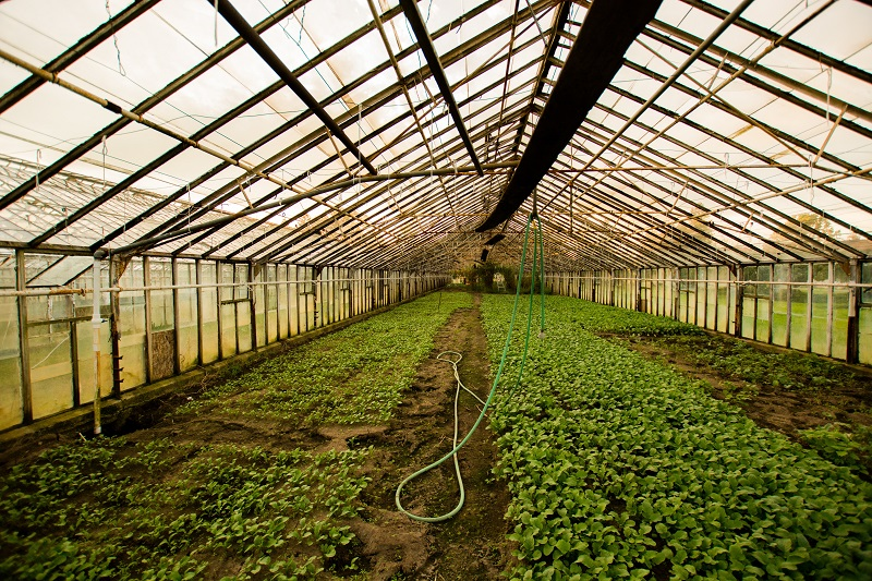 Are COB Grow Lights Better Inside View of a Green House