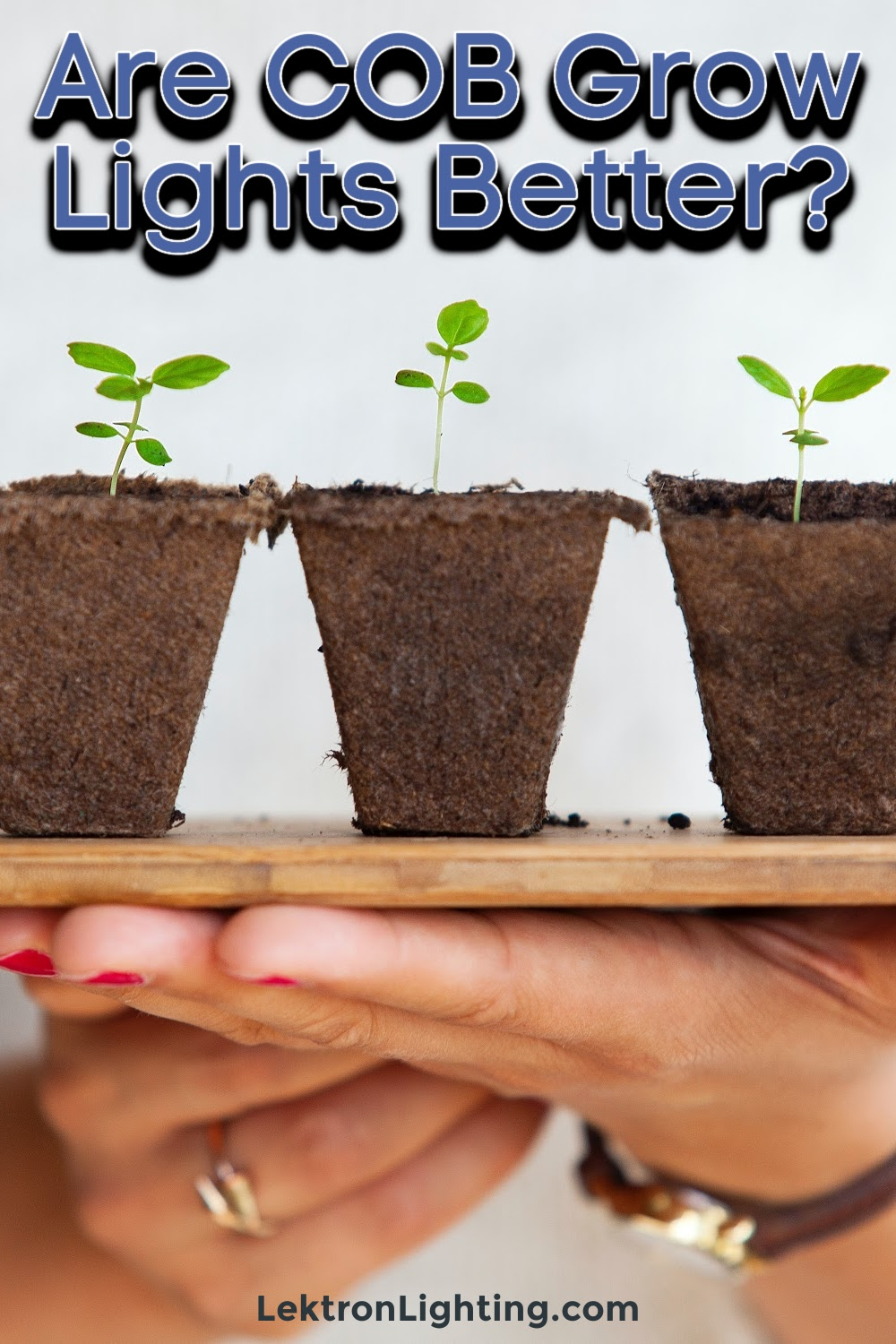 You may be asking if COB grow lights are better for growing plants and the answer is not as simple as yes or no.